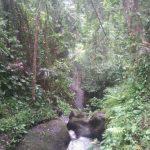 Inca o zi minunata in Bali