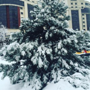 Lovely weather in Bucharest! Winter is here!
